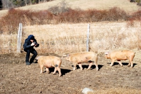 Marcus and the three pigs